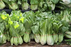 Bok choy Photographie stock