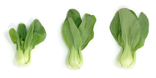 Bok choy Royalty Free Stock Images