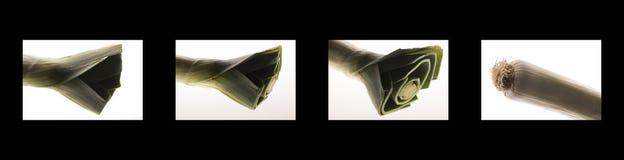 Bok Choy Abstract 1 - fyra panelbild Arkivbilder