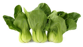 Bok choy Royalty Free Stock Photos