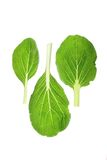 Bok Choy (Brassica rapa chinensis) Royalty Free Stock Images