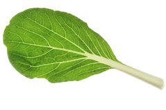 Bok Choy (Brassica rapa chinensis) Stock Image
