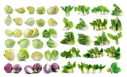 Bok choy  cabbage  isolated on white Royalty Free Stock Photos
