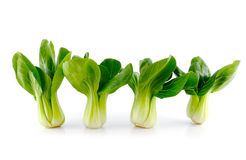 Bok choy (chinese cabbage) Stock Photo