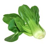 Bok choy chinese cabbage isolated on white royalty free stock photo