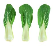 Bok choy chinese cabbage isolated on white royalty free stock photography