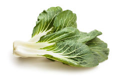 Bok choy Stock Images