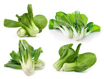 Bok choy (chinese cabbage or Qing geng cai) isolated on white ba Royalty Free Stock Photos