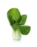 Bok choy (chinese cabbage or Qing geng cai) isolated on white Royalty Free Stock Images