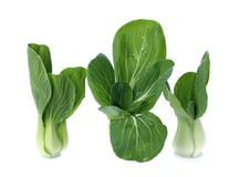 Bok choy (chinese cabbage or Qing geng cai) isolated on white Royalty Free Stock Photography