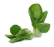 Bok choy (chinese cabbage or Qing geng cai) isolated on white Stock Photography
