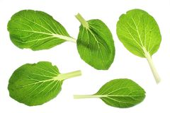 Bok choy (choy Brassica rapa) Fotografia Royalty Free