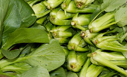 Bok Choy on display Royalty Free Stock Photos