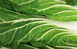 Bok Choy Grained Leaves Stock Photography