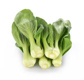 Bok choy groente op witte achtergrond Royalty-vrije Stock Fotografie