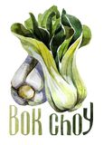 Bok Choy. Hand drawing watercolor on white background with title. royalty free illustration
