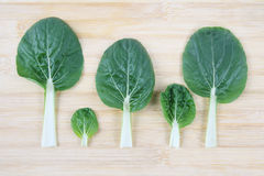 Bok choy leaf Royalty Free Stock Photography