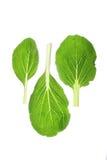 Bok Choy (rapa Brassica rapa) Obrazy Royalty Free
