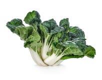 Bok choy vegetable isolated white background. Bok choy vegetable isolated on the white background royalty free stock photography