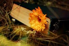 Bok och blomma arkivfoton