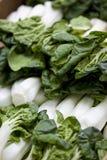 Bok orgánico Choy llenado para arriba en los granjeros mA Imágenes de archivo libres de regalías