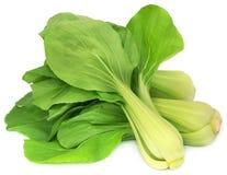 Bok orgânico Choy fotografia de stock
