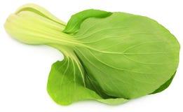 Bok orgânico Choy imagem de stock