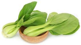 Bok orgânico Choy fotos de stock