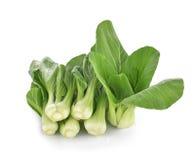 Boka choy warzywo na białym tle Fotografia Royalty Free