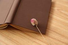 Boka och torkade blomman Arkivbild