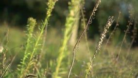Bokah Nature Twig Green Autumn. Green Nature twig bokah close up stock video footage