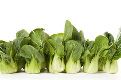 Bokchoy line-up. Group of bokchoy cabbages on a white background Royalty Free Stock Image