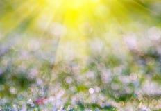 Boke der Höhepunkte auf dem grünen frischen Gras und dem Ra der Sonne Lizenzfreie Stockfotografie
