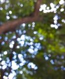 Bokeh在树下 免版税库存图片