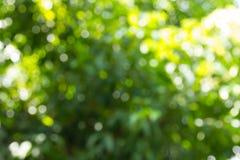 Bokeh在自然绿色背景中 免版税库存图片