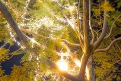 Bokeh电灯泡装饰了美丽的树 免版税库存照片