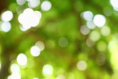 Bokeh颜色口气青苔,抽象自然本底 免版税库存图片