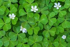 bokeh ελαφριά wildflowers άνοιξη πικραλίδων Στοκ Εικόνα