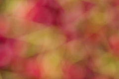 Bokeh вишни Стоковая Фотография