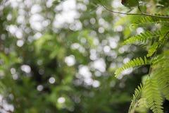 bokeh естественное Стоковая Фотография RF