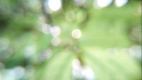 bokeh естественное Стоковое Фото