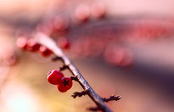 Bokeh зимы Стоковое фото RF