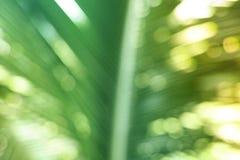 Bokeh, пальма Стоковая Фотография