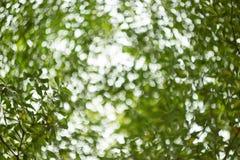 Bokeh природы Стоковое Изображение RF