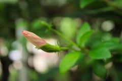 Bokeh цветка Стоковые Изображения