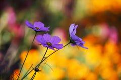 Bokeh 12 d'automne Photo libre de droits