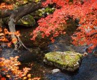 Bokeh 2 del otoño fotografía de archivo libre de regalías
