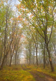 Bokeh 3 di autunno Fotografia Stock