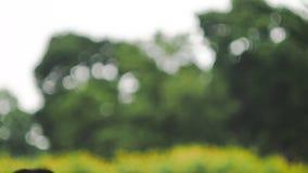 Grüner bokeh Hintergrund Lizenzfreies Stockbild