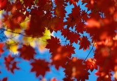 Bokeh 5 del otoño imagen de archivo libre de regalías